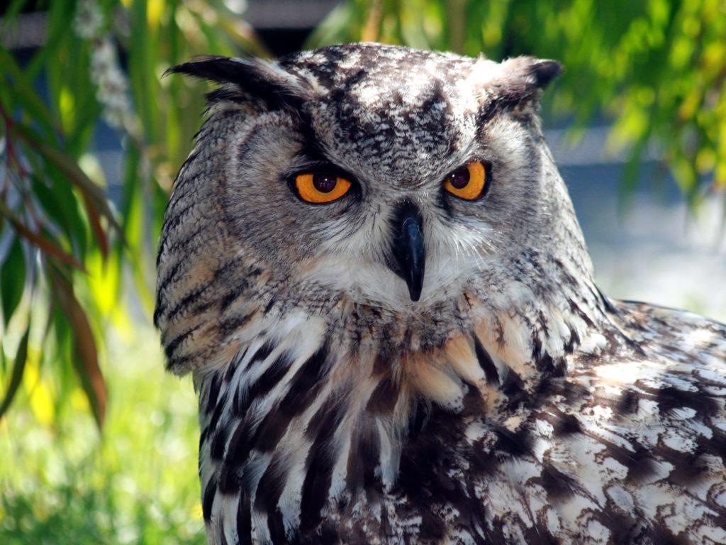Eagle Owl Casa rural Alora