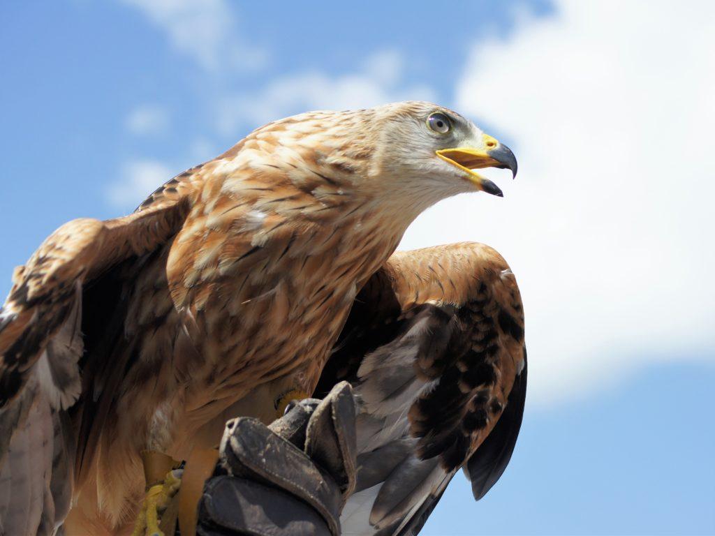 Golden Eagle Casa Rural Alora