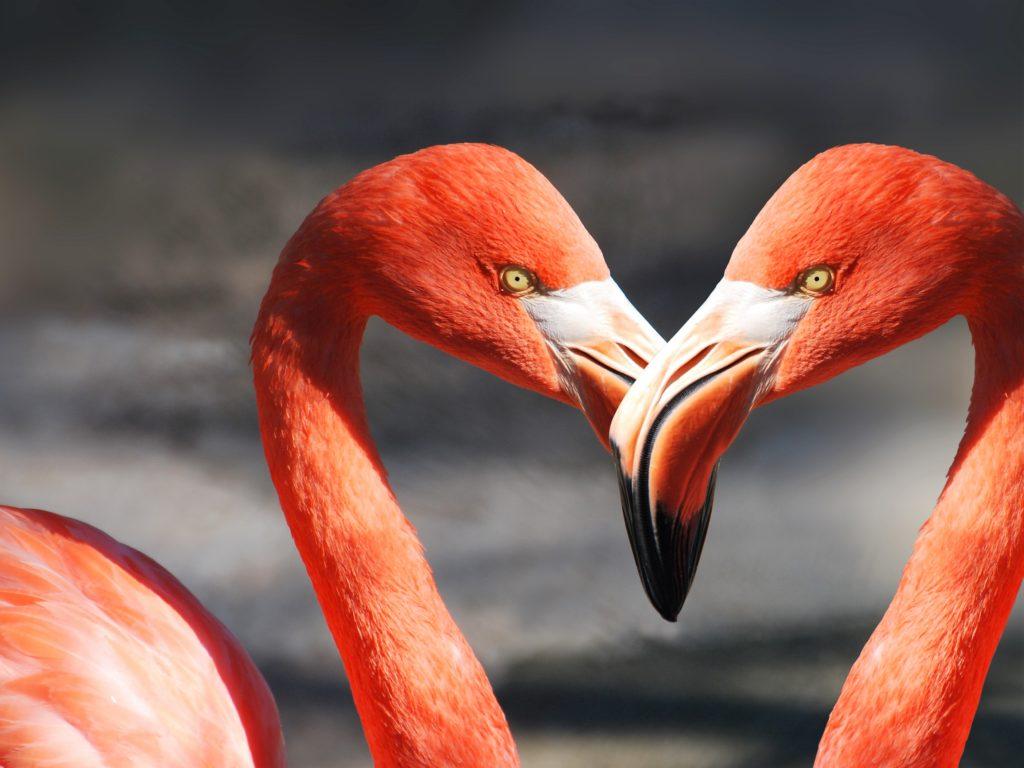 flamingo flamingos FUENTE DE PIEDRA