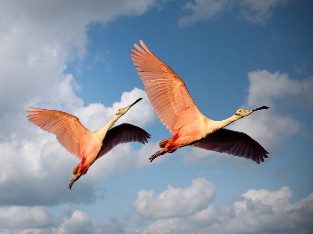 flamingos FUENTE DE PIEDRA