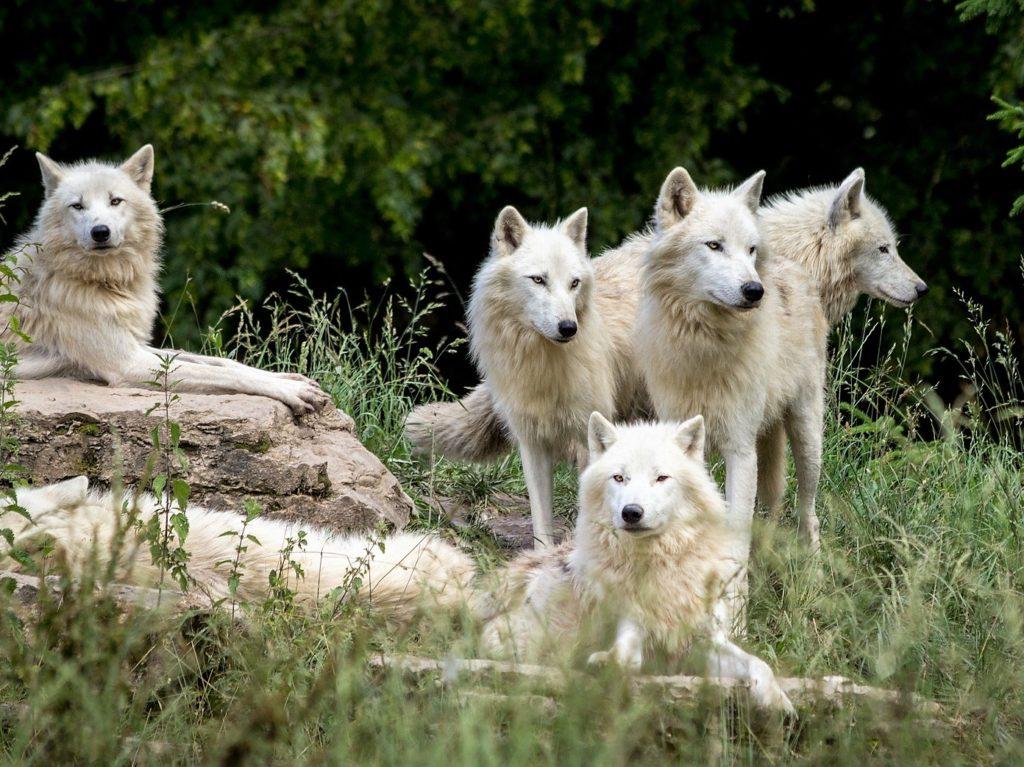 Lobo Park Wolf Sanctuary Alora