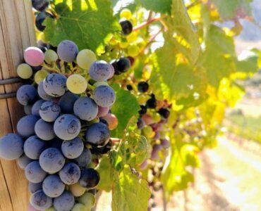 Winery Wandering!